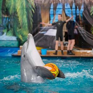 Дельфинарии, океанариумы Удельной
