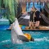 Дельфинарии, океанариумы в Удельной